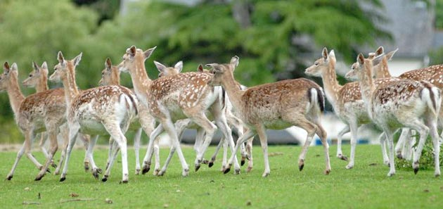Le Parc Animalier du Quinquis